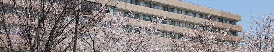sakura_header_01